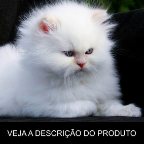 Gato Persa - Tudo Sobre A Raça (frete Grátis) Promoção!
