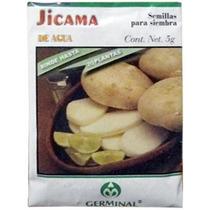 Semilla Para Siembra Jicama De Agua Germinal.