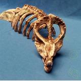 Adorno Acuario Terrario Y Pecera Esqueleto De Triceratops