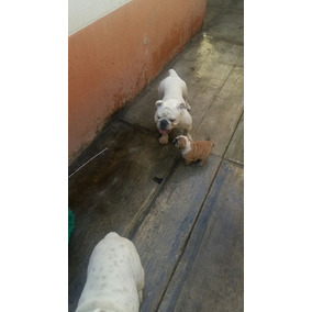 Pencion Canina Zona Chapultepec