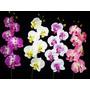 06 Orquideas Artificiais - Flores Arranjos Artificial Vasos