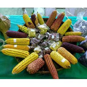 10 Kits De 30 Sementes De Milho Crioulo D