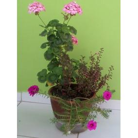 Vasos Para Plantas Feitos De Barro 03 Unidades