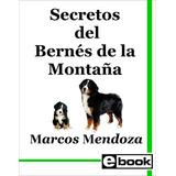 Bernés De Montaña Libro Adiestramiento Cachorro Adulto