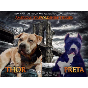 Thor Xxx Preta - Filhotes