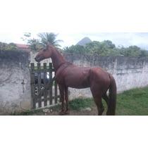 Cavalo Campolina Lindo, Grande, Sério, Dócil, Marchador