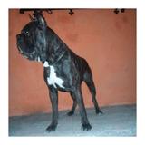Excelentes Cachorros Boxer Atigrado/negros, Pedigree