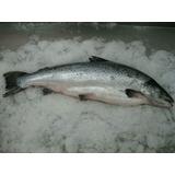 Salmon Rosado Entero Fresco