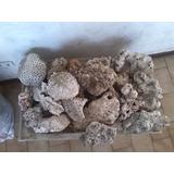 Piedras Decorativas De Coral El Precio Es Por Un Kilo