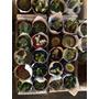 Gran Variedad De Cactus Y Suculentas