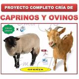 Aprende Produccion Cabras Caprino & Ovejas Ovino