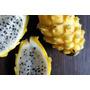 Pitaya Amarilla De Colombia - Fruta Semillas Para Plantas