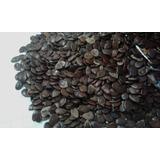 Leucena - 100 Sementes, Excelente Leguminosa Resiste A Seca