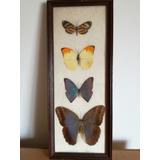 Cuadro Con Mariposas Disecadas Vintage