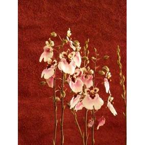 Orquideas Oncidium 4 Pseudobulbos