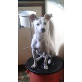Regalo O Doy En Adopcion Cachorro Mestizo De 1 Año Castrado