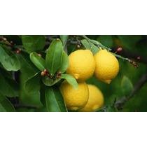 Combo 10 Arboles De Sombra Y Arboles Frut. Surtidos Oferta