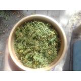 Artemisa Annua, Planta Medicinal Seca