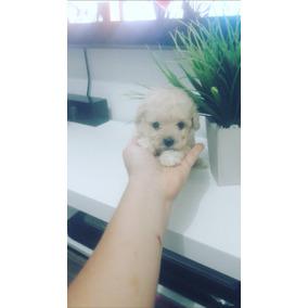 Poodle Micro Toy Lindos Bebês