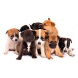 Busco Cachorro En Adopcion Cualquier Raza Caracas,edo Vargas