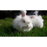 Vendo Hermosos Conejos Angoras Aleman Envios A Todo El Pais