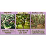 Sementes De Frutas Anãs Para Vasos P/ Mudas - À Sua Escolha