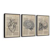 Quadro Decorativo C Moldura Medicina Coração Cérebro Médico