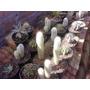 Cactus De Coleccion Ornato Jardin Paisajismo
