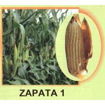 Maiz Hibrido Zapata1 20kg Semilla Para Grano De Temporal