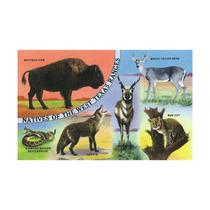 Buffalo, Coyote, Rattlesnake, Bob Cat, Antelope, Deer Prin