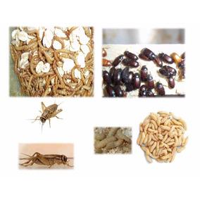 Insectos: Tenebrios,grillos,gusanos_de Cera, Zophobas