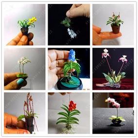 50 Semillas Orquideas Miniatura 20 Distintas Surtido