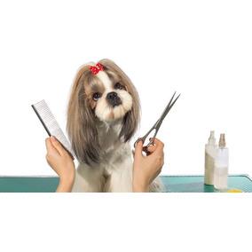 Curso Banho E Tosa Para Cães - Video Aulas