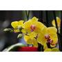 10 Sementes De Orquídea Lindas Mudas Para Jardim E Vasos