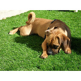 3 X 4 Premium Cesped Artificial Grass Paisaje Césped Dog...