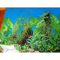 Papel Decorativo De Fundo De Aquário Plantas Tronco 120x60