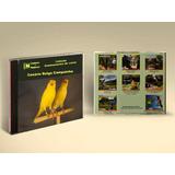 Cantos De Pássaros - Canário Belga Campainha
