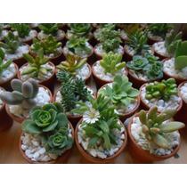 Plantas Suculentas Miniatura Decoradas Con Maceta