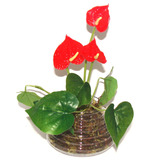 Arranjo De Flores Artificial Vaso De Vidro Anturio