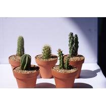 Cactus Miniatura En Maceta De Barro