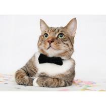 10 Moños Corbatas Collar Para Mascotas Perros Gatos