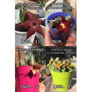 Seis X6 Apocynaceaes (huernias - Orbeas) A Eleccion