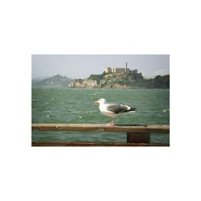 View Of Alcatraz 36x24