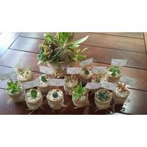 Souvenirs 20 Macetas Suculentas/cactus Eventos Cumple Boda