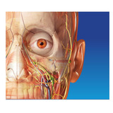 3d Pc Programa Medicina Anatomia Humana Body Atlas Digital