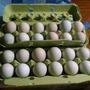 Huevos Azules/verdes Para Incubación Altísima Fertilidad