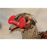 Óculos Anti Bicagem Galos Galinhas Faisão Anti Comer Ovos