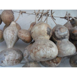 Semillas De Mate Porongo (lagenaria Siceraria) X150 Unidades