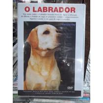 O Labrador Cão Adestramento Dvd Original Estado Impecável