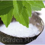 Sementes Estévia Adoçante Natural P/ Mudas Stevia Rebaudiana